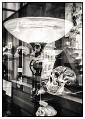 Shedding Light on Human Ancestry (Astroredg) Tags: bw nb blackandwhite noiretblanc monochrome redpath redpathmuseum museum muse montreal canada mcgill skulls cranes light lumire reflections reflets ancestry ancestors anctres human humains photographia