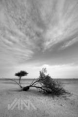 After The Storm (Jun Qatar // Love Nature) Tags: sky bw panorama rock skyline digital photo blackwhite sand nikon flickr gulf shot desert middleeast wideangle best tokina arab date nikkor jam sanddune doha qatar bestshot d90 1116mm daghfal