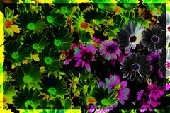 Flower Power (BeachBumBlu) Tags: flower nature dallasarboretum hss isuckatphotoshop slidersunday