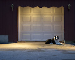 Waiting (oliva732000) Tags: light dog chien pet home evening waiting suburban dusk garage newhampshire nh hund driveway commuter concord loyal pathos