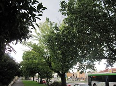 Green: tree canopy and bus! 366/64 52/10/1 (Hecuba's Story) Tags: green northfitzroy 2011pad