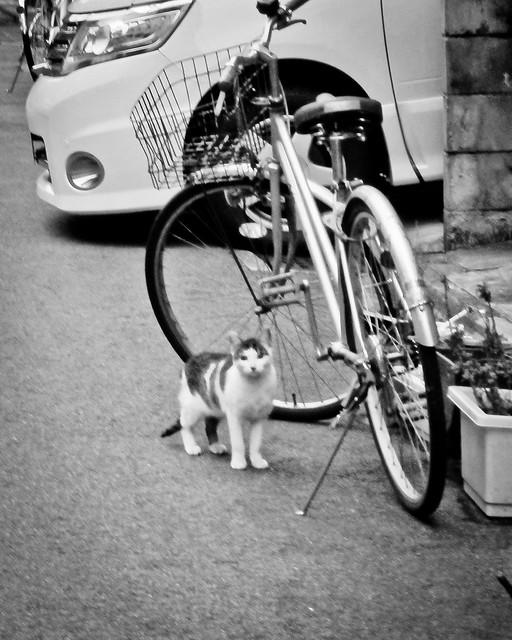 Today's Cat@2012-03-04