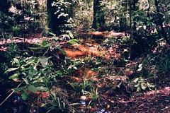 Lake Rotoponaumu (mikeasaurus) Tags: new blue trees red summer brown sunlight mountain holiday green rot nature wet water berg forest volcano wasser fuji sommer natur 200asa olympus zealand alpine nz grn braun ferns wald atmospheric nas downunder alpin mtruapehu vulkan nass trip35 mttongariro colorfilm sonnenlicht aoteoroa glowingwater autaut mtngarahoe january2012 lakerotoponaumu