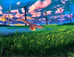 The Power of the Wind (Rusty Russ) Tags: new plant color green bird grass america photoshop real for yahoo google flickr power wind sale earth massachusetts fake nuclear manipulation hampshire montage future getty wilderness vote improved turbine bing facebook stumbleupon daum premonition sancutary