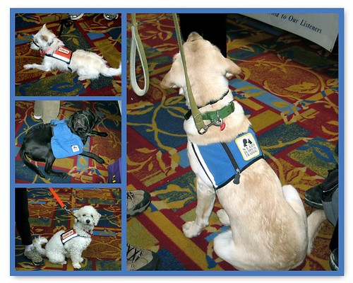 NEADS: Dogs for Deaf and Disabled Americans/Canines for Combat Veterans