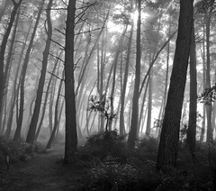 Enchanted (Tim Bow Photography) Tags: trees winter light newzealand blackandwhite bw sun sunlight white mist black silhouette fog mystery forest grey bush magic nz mysterious british welsh magical enchanted svenska timboss81 timbowphotography
