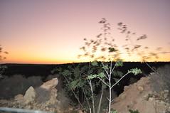 Tramonto AGADIR 2 (Hicham Charqane) Tags: nikon natura marocco fiori sole viaggi deserto d5000 charqane hichama
