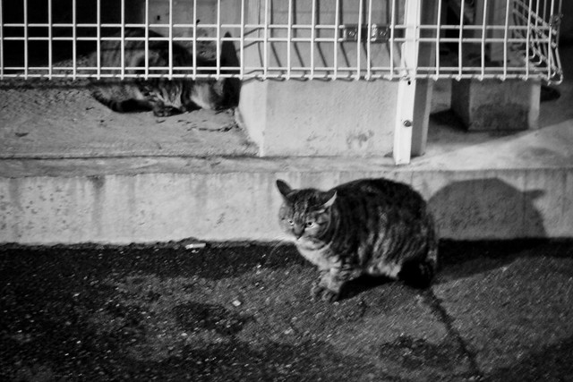 Today's Cat@2012-03-31