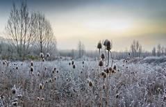 invierno (Ricardo Esteve) Tags: paisajes spain pentax invierno frio cuenca