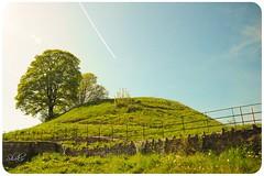 One Spring Day (Shakir's Photography) Tags: blue sky flower tree cute green grass fence happy spring nice hell شجرة shakir سماء ربيع جو عشب شجر أخضر تلة زهور صابر سعادة زرقاء خضراء شاكر