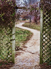"Week #07 ~ ""Roads, Paths, Trails"" (JewelsOK) Tags: garden botanical vines path trellis trail 2012 week07 52of2012"