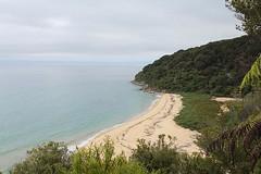 From Bark Bay to Torrent Bay (7) (4nitsirk) Tags: hiking shoreline southisland tramping abeltasmannationalpark