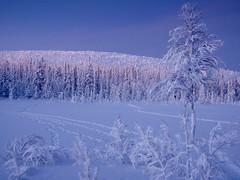 Akaskero à la lumière du matin (Tonton Dave) Tags: morning snow forest finland landscape lappland neige paysage forêt matin laponie akäskero