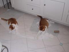 kitties having fun (corsi photo) Tags: cats pets animals kitty kitties felines toiletpaper badkitties