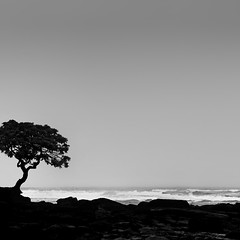untitled . (helmet13) Tags: d300s raw bw mauritius tree ocean waves space emptiness wavebreaking storm basalt aoi bestcapturesaoi peaceaward platinumpeaceaward 100faves world100f heartaward simplicity