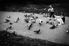 happy 100th birthday mr doisneau (camden olive) Tags: blackandwhite london kids children candid pigeons streetphotography hydepark serpentine 100thbirthday robertdoisneau feedingbirds