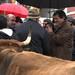 Queremos gobernar para que la reforma de la PAC proteja la actividad agraria y ganadera de Asturias