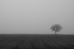 Tree fog (Nick-K (Nikos Koutoulas)) Tags: tree field fog alone kozani