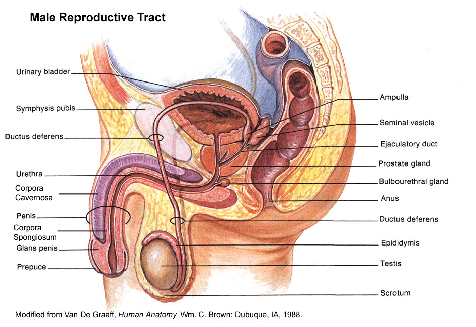 The Worlds Most Recently Posted Photos Of Reproductive And System