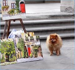 IMG_0769 (iurlanik) Tags: italy cane italia firenze toscana animali citt quadri pitture canoneos50d