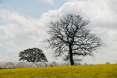 Fields near Stafford (Ugborough Exile) Tags: uk england nikon staffordshire midlands stafford topshots d80 natureplus photosandcalendar panoramafotográfico theoriginalgoldseal esenciadelanaturaleza