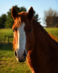 Handsome Guy (keeva999) Tags: horse texture animals rural spring nikon country iowa farmanimals impressedbeauty horsephotography kimklassen d3100