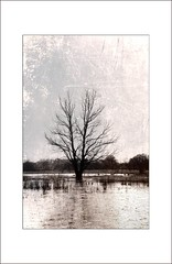 L'inondation (BrigitteChanson) Tags: tree flood alluvione rbol albero arbre inondation inundacin flickraward