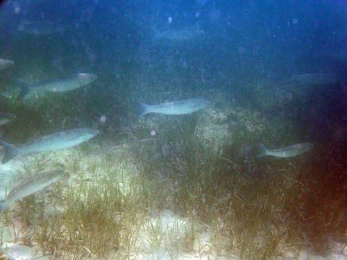 Porto Cesareo - SUB