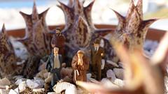 Asuntos Espinosos 98 (quijano M) Tags: cactus macro toy toys miniatures andalucía plantas almería espinas carboneras miniaturas crasas asuntosespinosos