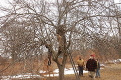 "Apple Pruning Party <a style=""margin-left:10px; font-size:0.8em;"" href=""http://www.flickr.com/photos/91915217@N00/13528309143/"" target=""_blank"">@flickr</a>"