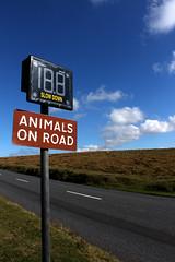 News Day Livestock 4 (jadedyermedia) Tags: road car sign speed accident devon roadsign awareness incident livestock dartmoor increase collision dartmoornationalpark
