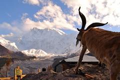 Parbat (Hamza Naeem Khan) Tags: pakistan mountains hunza himalayas gilgit nangaparbat fairymeadows