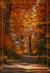 ..:: orange leaves ::.. (bora_binguel) Tags: autumn red orange tree rot nature way forrest herbst jahreszeit natur wald farbe baum yol weg aa orman krmz sonbahar doa turuncu bobidigitalphotography