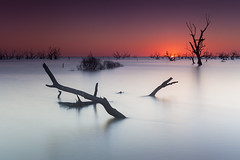 Menindee (New South Wales, Australia) (Volker Birke) Tags: sunset lake tree river flood dusk australia driftwood nsw newsouthwales outback eucalyptus shrub gumtree murray deadwood waterscape darlingriver menindee inundated