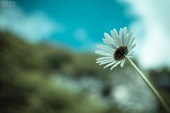 Flower in the sky (GiuliaSacchetPH) Tags: sky flower 35mm nikon d5100