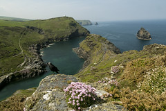 The Thrift and Jackdaw (jebob) Tags: flowers summer england sky green nature water grass coast rocks cornwall cliffs atlantic hills tidal boscastle seathrift jackdaw