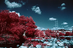 Red River Valley (analoguefilm) Tags: analog 35mm river kodak infrared e6 colorinfrared analogphotography minoltax570 aerochrome