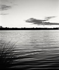 grass silhouette (thepurpleghost) Tags: nikon fuji voigtlander f2 40mm fe 13 ilford acros perceptol slii