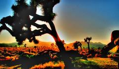 Gram Parson's Ghost (Spebak) Tags: california sunset sun canon nationalpark desert joshuatree bluesky socal blueskies southerncalifornia canondslr deserted caprock californiadesert blueskys joshuatreenationalpark canon30d spebak
