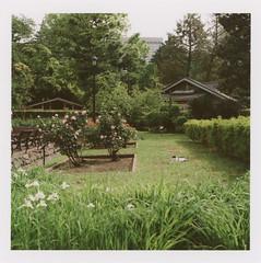 insta239 (sudoTakeshi) Tags: film japan cat garden landscape tokyo kodak 120film hasselblad 500c ambient filmcamera  portra   planar kodakfilm  carlzeiss   kodakportra hasselblad500c  planar80mm kodakportra160  carlzeissplanar