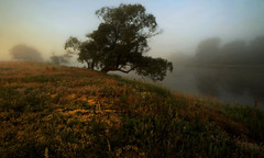 . (MarcelXYZ) Tags: cesarz marcelxyz drohiczyn landscape scenery morning fog tree river colors nature canon