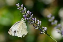 Butterfly (@lbyper) Tags: macro nature fuji s5pro