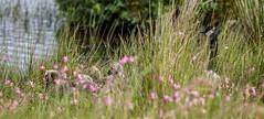 5DSA0846_Lr6_4s1s (Richard W2008) Tags: cathkinmarshwildlifereserve scottishwildlifetrust scotland nature flora fauna