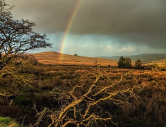 Rainbow's End (Perkvats Havatkov) Tags: trees storm abandoned nature rain clouds rainbow branches derelict antrim