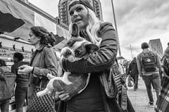contact x 2 :-) (Peter M. Meijer) Tags: street city people urban woman man holland netherlands closeup rotterdam strada candid strasse frenchbulldog marketplace puppie fujixt1 fujinon16mm