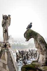 Chimeras v Pigeon (eScapes Photo) Tags: paris france pigeon notredame gargoyle chimera