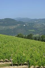 DSC_3856 (erinakirsch) Tags: italy castle landscape florence vineyard view wine vine winery vineyards views tuscany toscana grape grapevine florenceitaly frescobaldi winegrapes nipozzano
