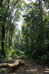 Trail (keithbcg) Tags: forest la path laos bolikhamsai bannahin