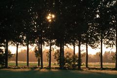 Sole filtrato (DADALETI) Tags: alberi canon tramonto sole controluce fotografare eos400d