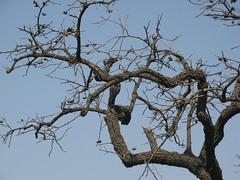 """柿子树 • <a style=""""font-size:0.8em;"""" href=""""http://www.flickr.com/photos/10248665@N07/7010382043/"""" target=""""_blank"""">View on Flickr</a>"""